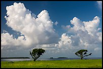 Trees, Florida Bay, and clouds. Everglades National Park ( color)