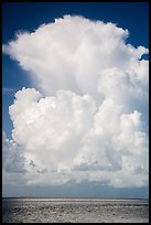 Summer clouds above waters, Florida Bay. Everglades National Park ( color)