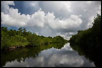 Buttonwood Canal and rain clouds. Everglades National Park ( color)