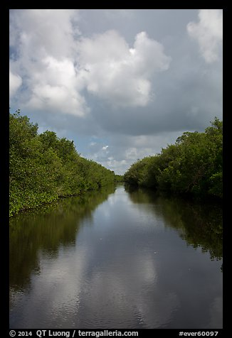 Buttonwood Canal bordered by tropical vegetation. Everglades National Park (color)