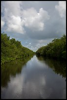 Buttonwood Canal bordered by tropical vegetation. Everglades National Park ( color)