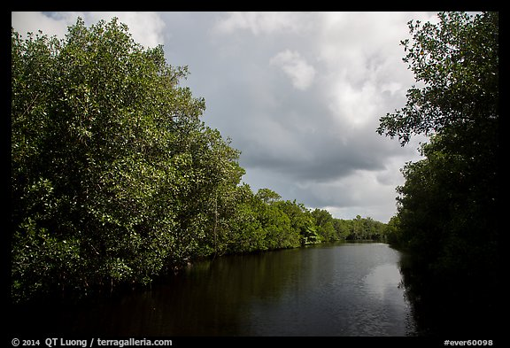 Tropical vegetation growing along canal. Everglades National Park (color)