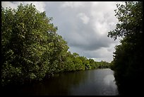 Tropical vegetation growing along canal. Everglades National Park ( color)