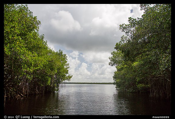 Coot Bay framed by mangroves. Everglades National Park (color)