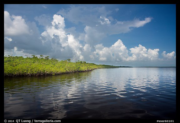 Mangrove shore of Coot Bay. Everglades National Park (color)