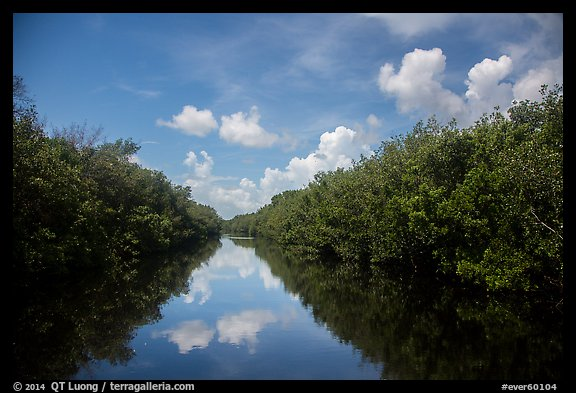 Water-level view of Buttonwood Canal. Everglades National Park (color)