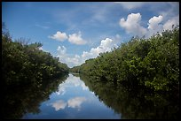 Water-level view of Buttonwood Canal. Everglades National Park ( color)