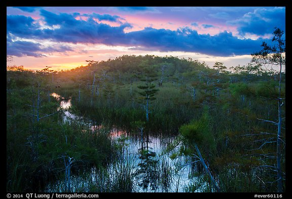 Cypress dome, summer sunset. Everglades National Park (color)