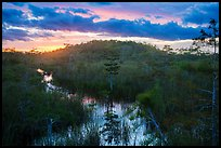 Cypress dome, summer sunset. Everglades National Park ( color)