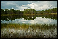 Lake, Long Pine Key. Everglades National Park ( color)