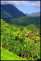 Kipahulu mountains. Haleakala National Park, Hawaii, USA. (color)