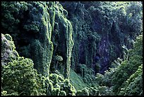 Steep Ohe o gorge walls covered with tropical vegetation, Pipiwai trail. Haleakala National Park, Hawaii, USA. (color)