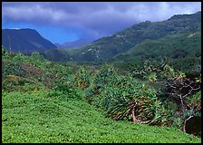 Pandemus trees and Kipahulu mountains. Haleakala National Park, Hawaii, USA.
