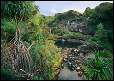 Pandemus trees and some of the seven sacred pools. Haleakala National Park, Hawaii, USA.