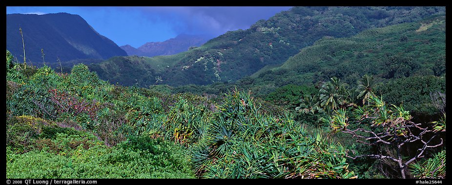 Tropical landscape with luxuriant vegetation on slopes. Haleakala National Park (color)