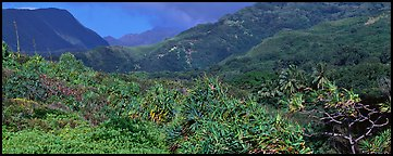 Tropical landscape with luxuriant vegetation on slopes. Haleakala National Park, Hawaii, USA.