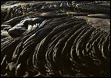 Hardened rope lava and ferns. Hawaii Volcanoes National Park, Hawaii, USA.