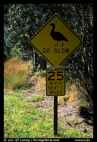 Road sign showing the nene (Hawaiian goose). Hawaii Volcanoes National Park (color)