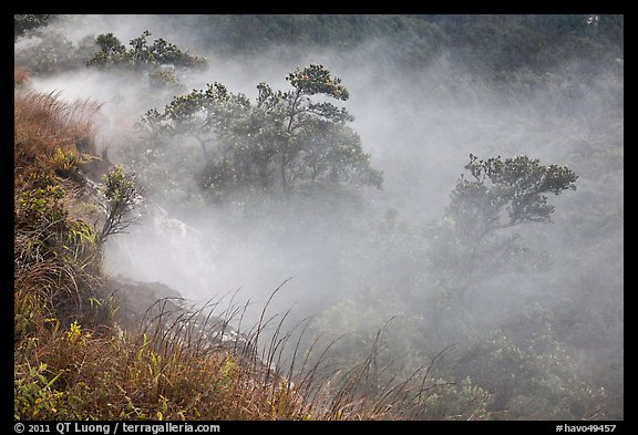 Steaming bluff and trees. Hawaii Volcanoes National Park, Hawaii, USA.
