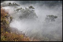Steaming bluff and trees. Hawaii Volcanoes National Park, Hawaii, USA. (color)