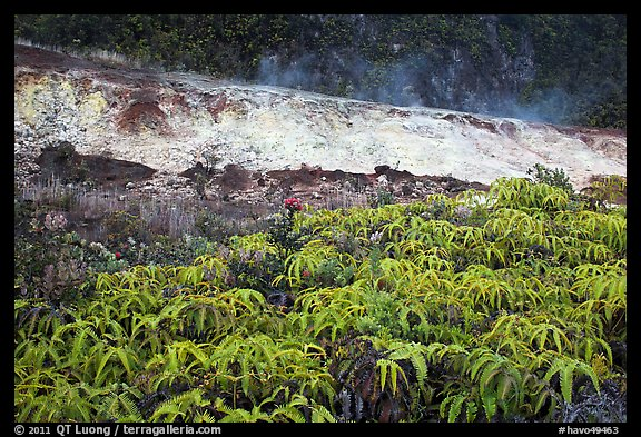 Uluhe ferns and sulphur bank. Hawaii Volcanoes National Park, Hawaii, USA.