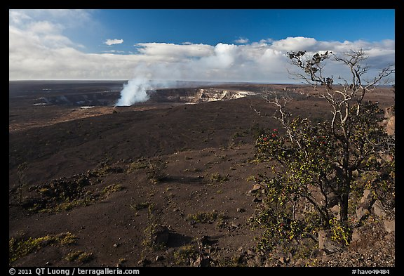 Ohia tree and Kilauea caldera. Hawaii Volcanoes National Park (color)