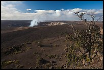 Ohia tree and Kilauea caldera. Hawaii Volcanoes National Park, Hawaii, USA. (color)