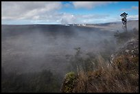 Steam from vents at the edge of Kilauea caldera. Hawaii Volcanoes National Park, Hawaii, USA. (color)