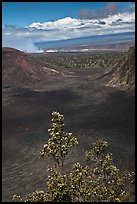 Kilauea Iki Crater, Halemaumau plume, and Mauma Loa. Hawaii Volcanoes National Park, Hawaii, USA. (color)