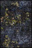 Trees growing on crater steep walls. Hawaii Volcanoes National Park, Hawaii, USA.