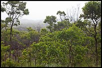 View over forest from Mauna Loa Lookout. Hawaii Volcanoes National Park, Hawaii, USA.