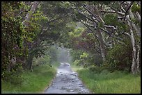Mauna Load Road. Hawaii Volcanoes National Park, Hawaii, USA. (color)