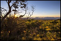 Sunrise from Mauna Loa overlook. Hawaii Volcanoes National Park ( color)