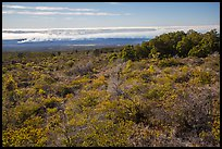 Mauna Loa forested slope and Halemaumau summit. Hawaii Volcanoes National Park, Hawaii, USA. (color)