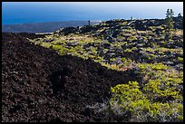 Vegetation on Aa lava field edge. Hawaii Volcanoes National Park, Hawaii, USA. (color)