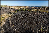 Puu Loa petroglyphs. Hawaii Volcanoes National Park, Hawaii, USA. (color)