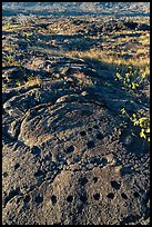 Petroglyph with motif of cupules and holes. Hawaii Volcanoes National Park, Hawaii, USA. (color)