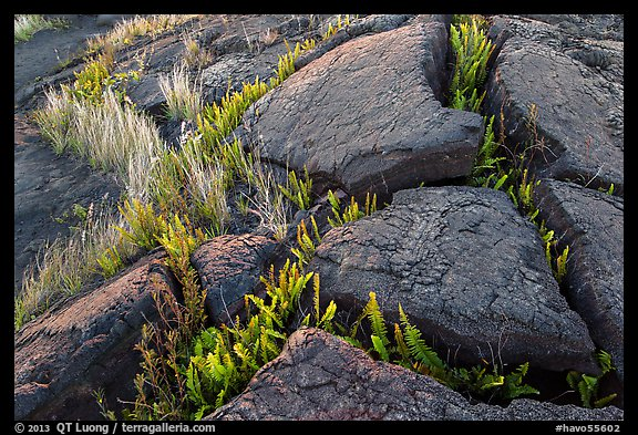 Cracked lava rocks and ferns at sunset. Hawaii Volcanoes National Park (color)