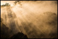 Trees and sunrays in volcanic steam. Hawaii Volcanoes National Park, Hawaii, USA. (color)