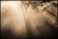 Backlit trees and sun rays in thermal steam. Hawaii Volcanoes National Park, Hawaii, USA. (color)