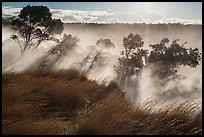 Grasses and trees, Steaming Bluff. Hawaii Volcanoes National Park, Hawaii, USA. (color)