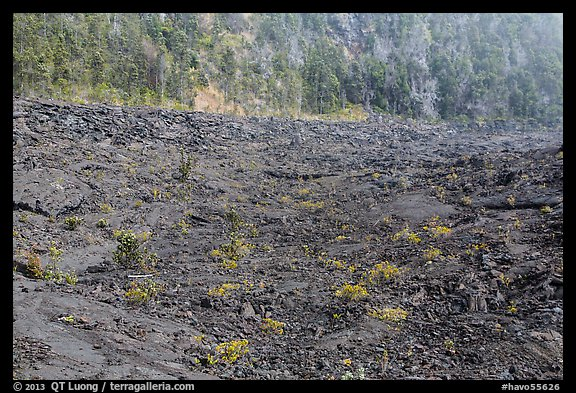 Kilauea Iki Crater floor and walls. Hawaii Volcanoes National Park (color)