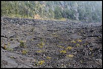 Kilauea Iki Crater floor and walls. Hawaii Volcanoes National Park, Hawaii, USA. (color)
