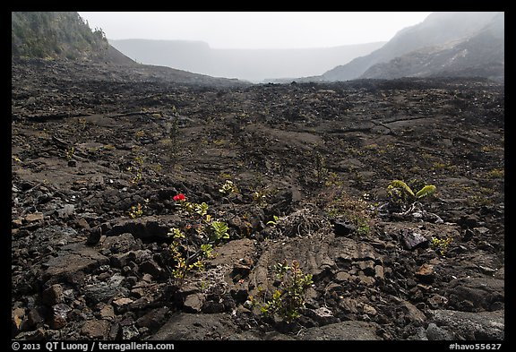 New growth on Kilauea Iki crater floor. Hawaii Volcanoes National Park (color)