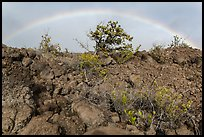 Srubs, lava, and rainbow, Kau desert. Hawaii Volcanoes National Park, Hawaii, USA. (color)
