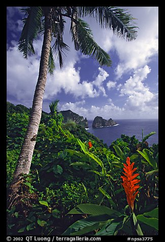 Palm tree and wild ginger along the road from Afono to Vatia, Tutuila Island. National Park of American Samoa (color)