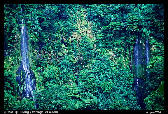 Ephemeral waterfalls in Amalau Valley, Tutuila Island. National Park of American Samoa