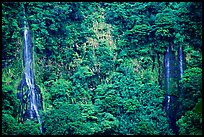 Ephemeral waterfalls in Amalau Valley, Tutuila Island. National Park of American Samoa ( color)
