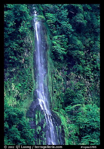 Ephemeral waterfall formed after the rain, Tutuila Island. National Park of American Samoa