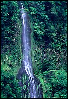 Ephemeral waterfall formed after the rain, Tutuila Island. National Park of American Samoa ( color)